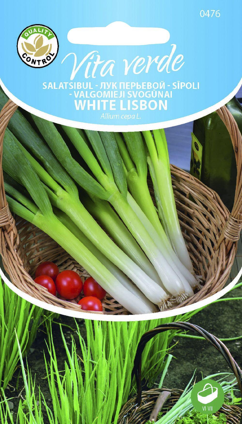 Salatisibul White Lisbon