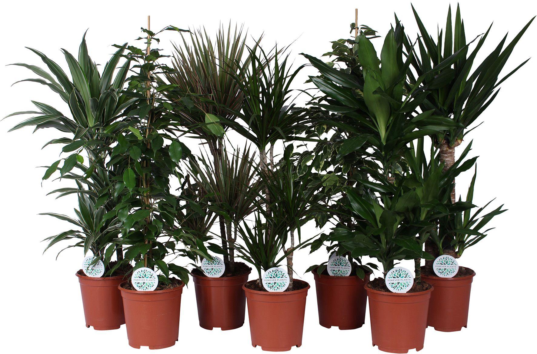 Roheliste taimede Mix P21