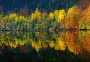 Fototapeet Autumn Forest Lake