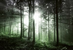 Fototapeet Sun Rays