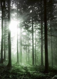 Fotottapeet Sun Rays