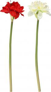 Amarüllus 70 cm