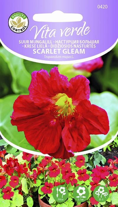 Suur mungalill Scarlet Gleam