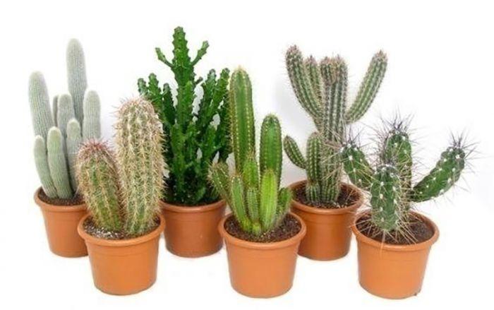 Kaktuste mix Ø 26 cm