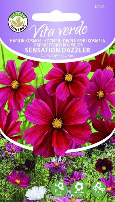 Harilik kosmos Sensation Dazzler