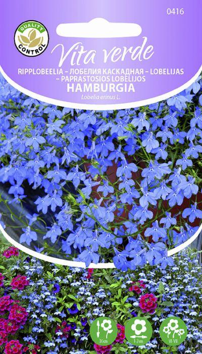 Ripplobeelia Hamburgia Mini