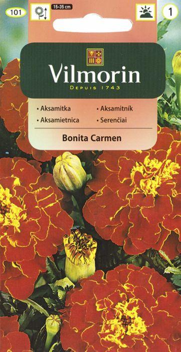 Peiulill Bonita Carmen Vilmorin