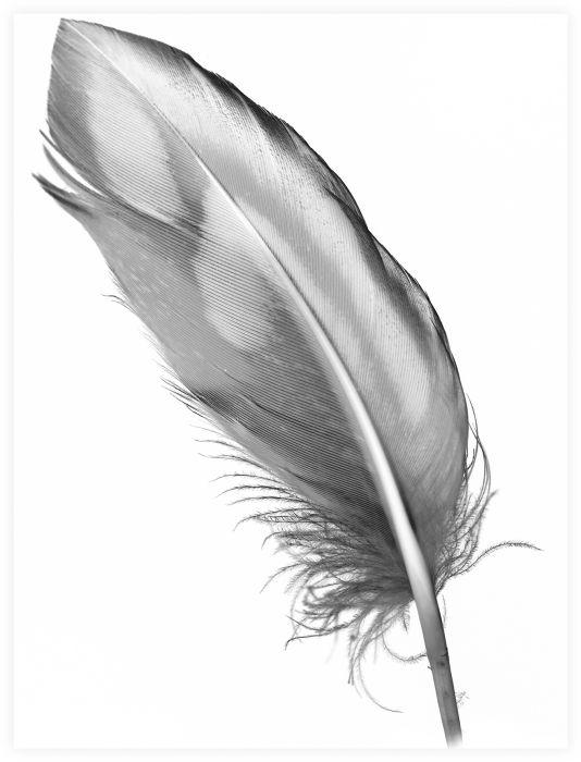 Sisustuspilt Feather