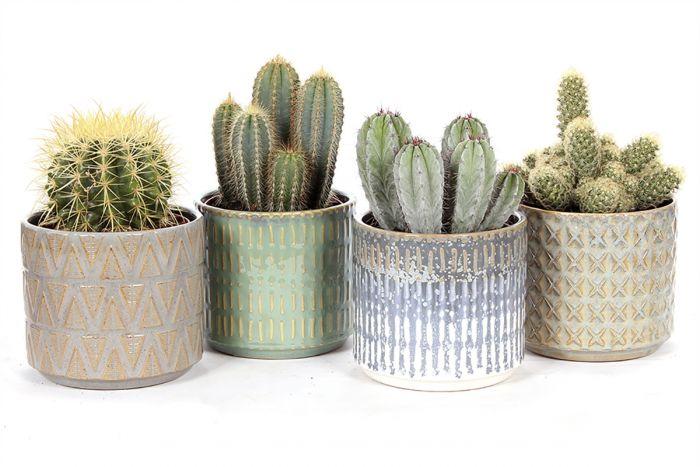 Kaktuste valik Ø 14 cn