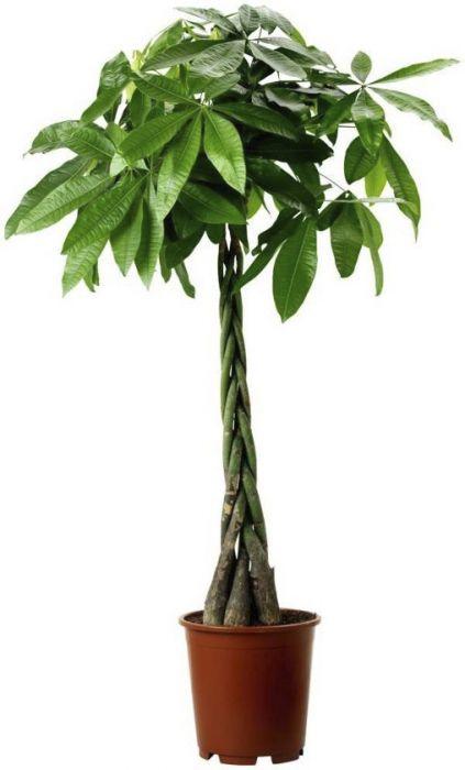Vesipahhiira 170 cm
