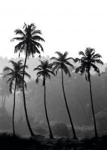 Sisustuspilt Black High Palms