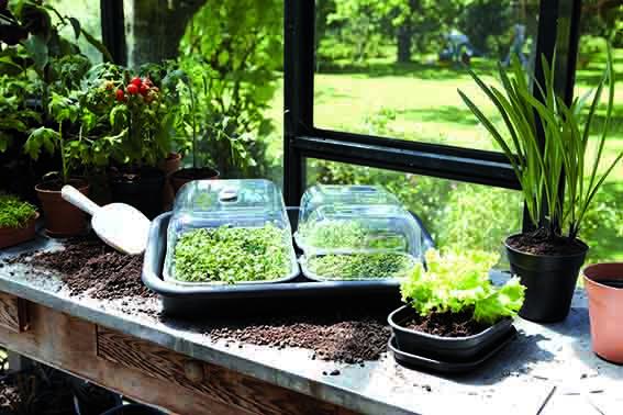Aianduskalender ja aiandusnõuanded