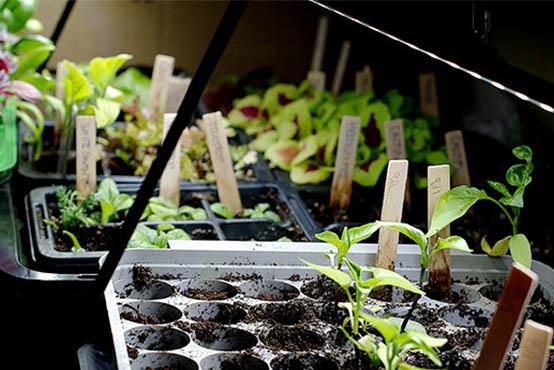 Taimelamp - valguskiir taimele pimedaks perioodiks